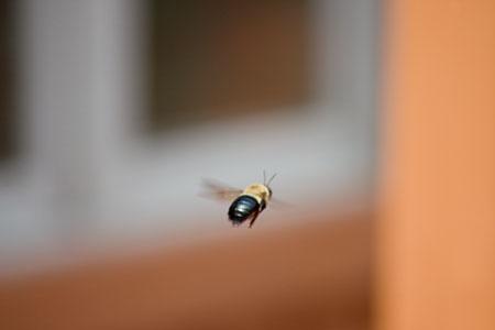 buzzing_bee